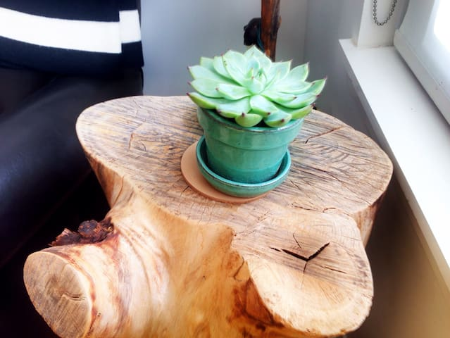 Succulents are our favorite plants. You can find them throughout the house.