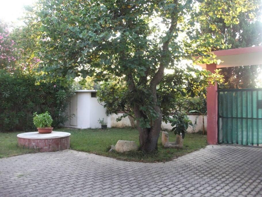 Giardino, parcheggio, bagno esterno