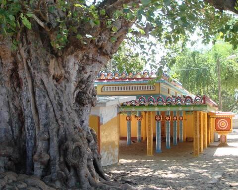 Sri Lanka: A natural paradise.