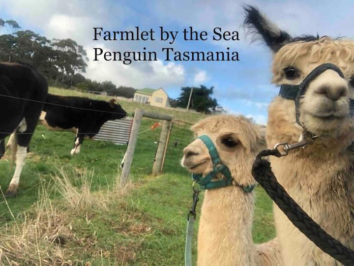 'Farmlet by the Sea' -Farmstay in Penguin Tasmania