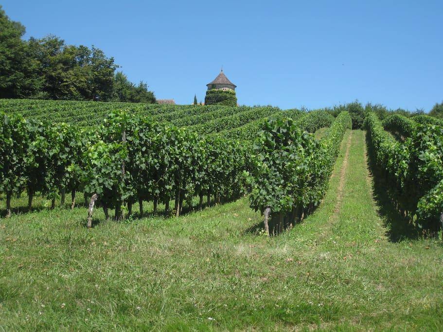 les vignobles du village