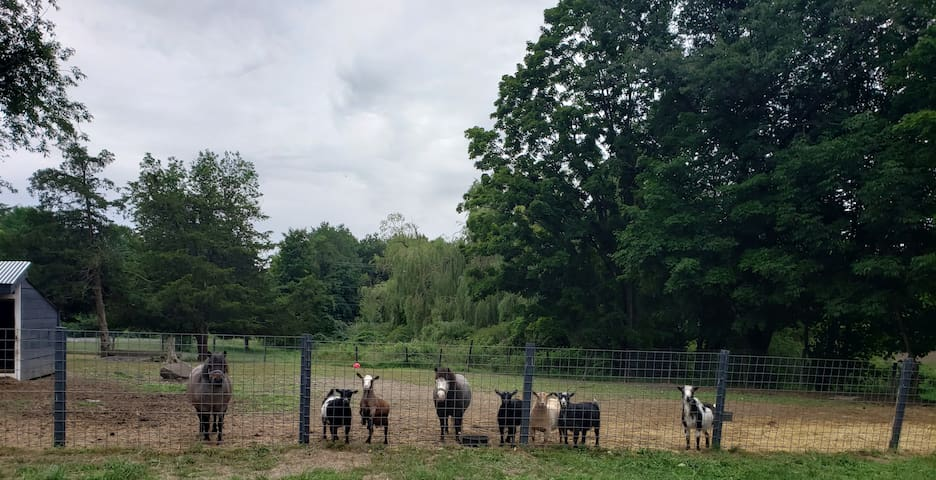 """Animal & Nature Lovers- """"Goat Glamping"""" is here!!!"""
