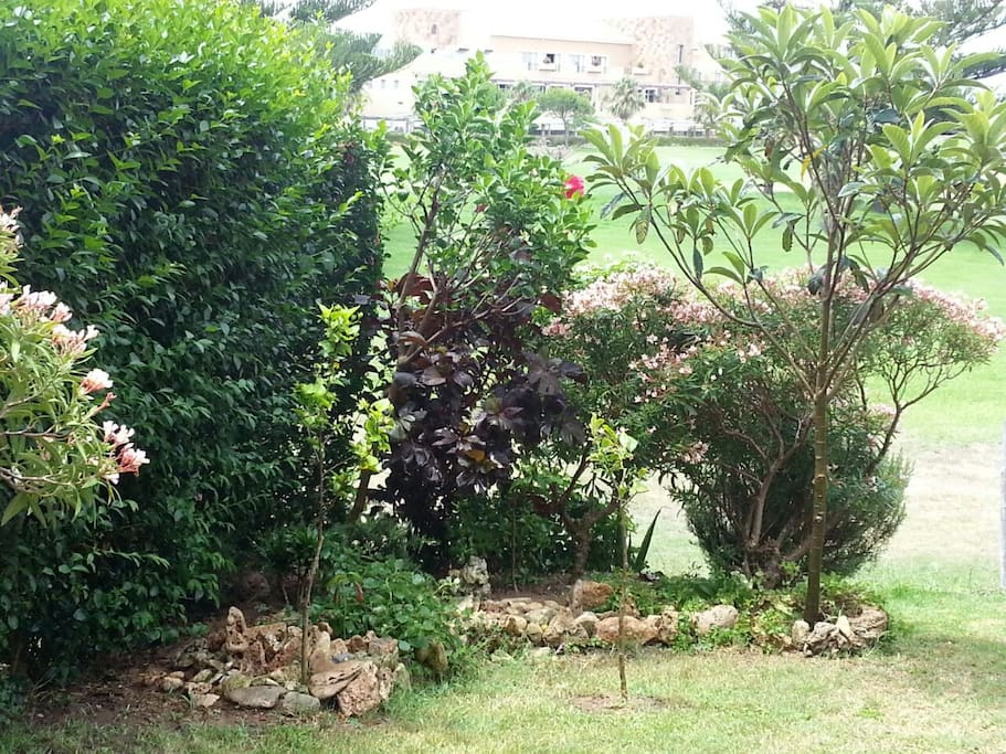 Jardín privado (1)