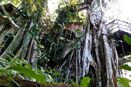 Caribbean Jungle Tree House by Sea - Cahuita
