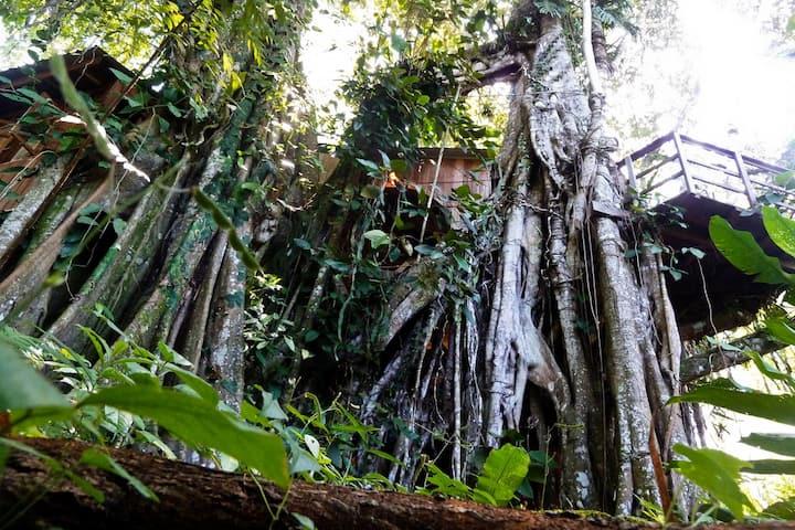 Caribbean Jungle Tree House by Sea
