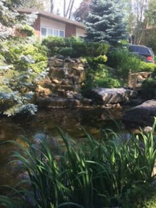 Fish pond and water fall