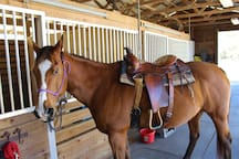 Horse back riding at 35$/p/h