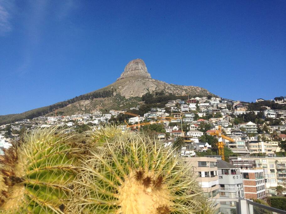 Lions head view from balcony