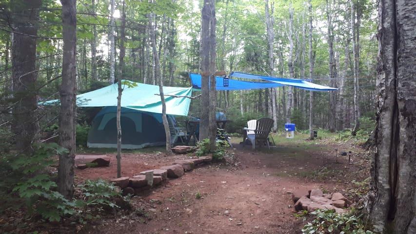 * Hasselfreecamping @ Nature Life camp (tent incl)
