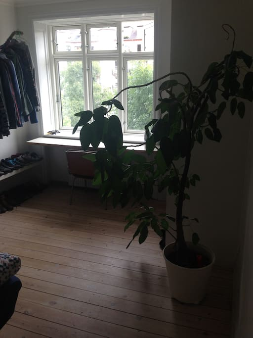 Bedroom and my beloved plant