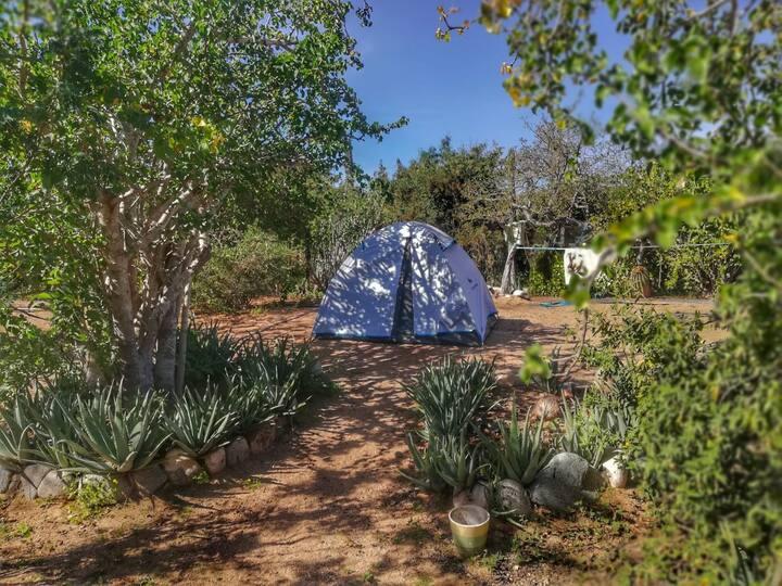 magic camping // campamento mistico
