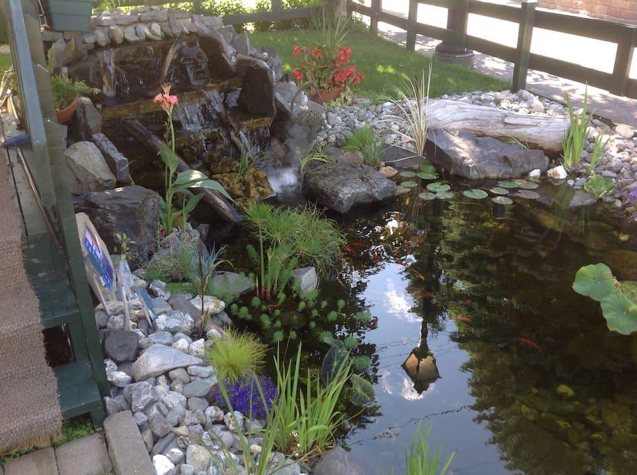 Jardin d'eau à l'avant de la maison.