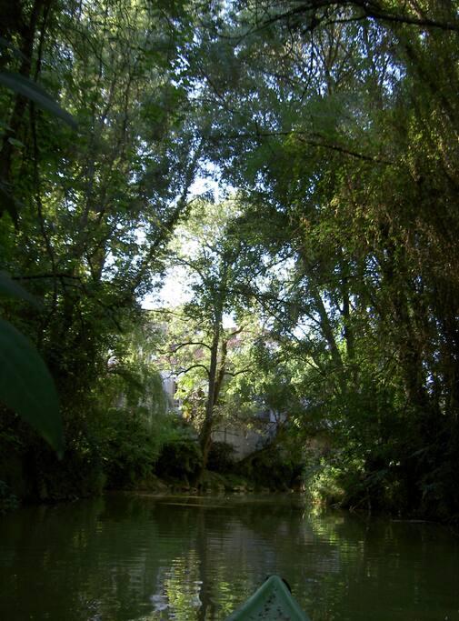 Promenade en kanoë le long de l'île