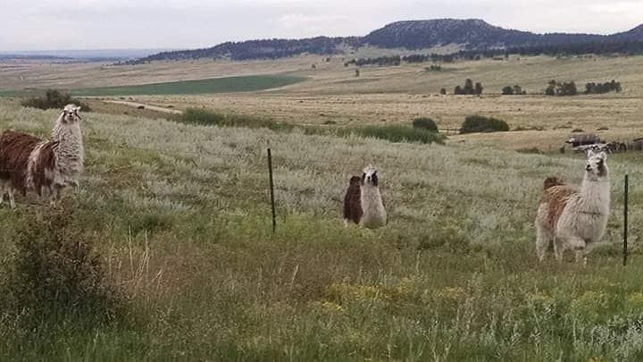 Bijou View Ranch Rural Getaway