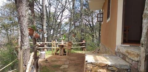 Cuarto el Colibrí/El Bosque de las Ranas