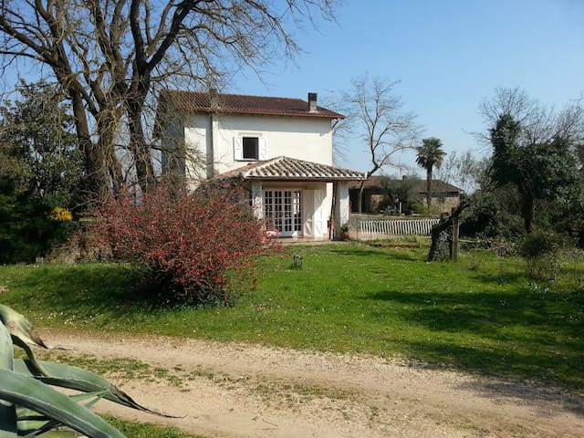 Country House In The Olive Grove - gallese - Vila