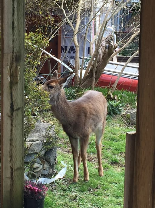 one of my neighbours eating my rose bush