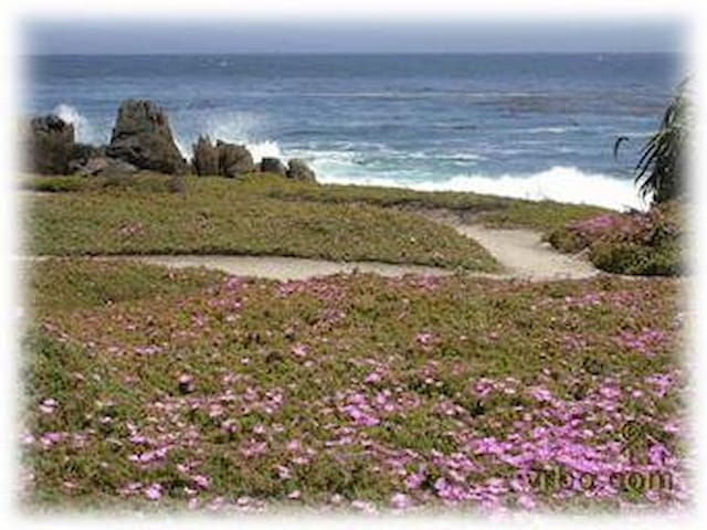BEACH COTTAGE, two blocks to ocean! - Pacific Grove - House