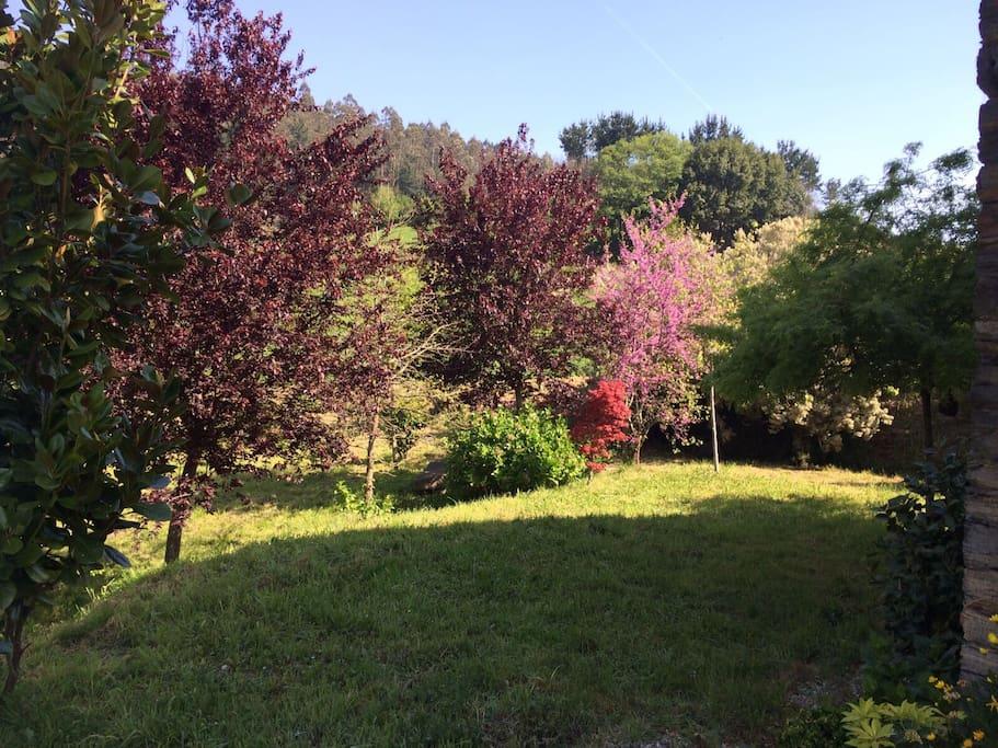 Magnolios, liquidambars ,cerezos,manzanos rodeando la casa.