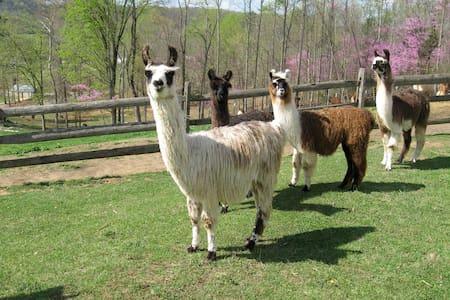 """A """"Llama Chalet"""" Camper on a Working Llama Farm"""