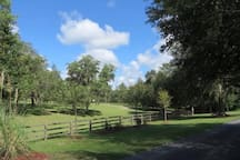 Rock Pointe Ranch horses, sun, fun. The Vanner