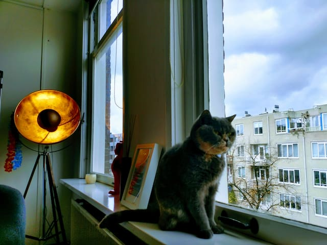 Cannabis & Cat Lovers: Amsterdam's 1st Airbnbud