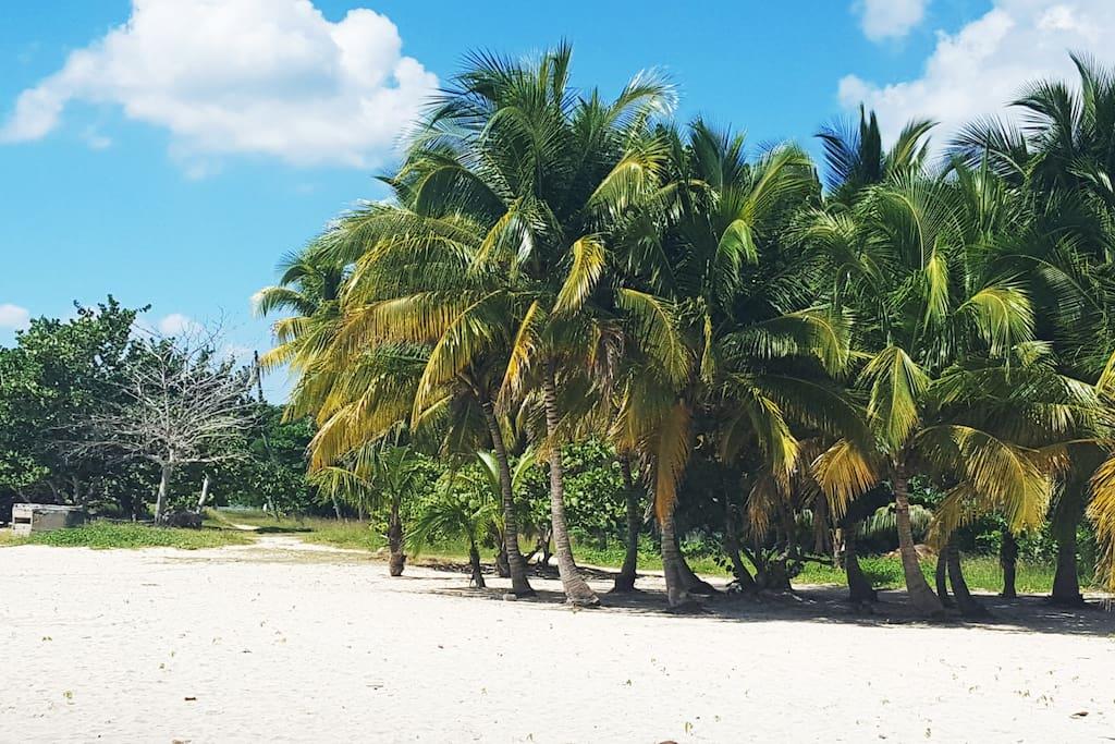 Playa Larga beach (surrounding area)