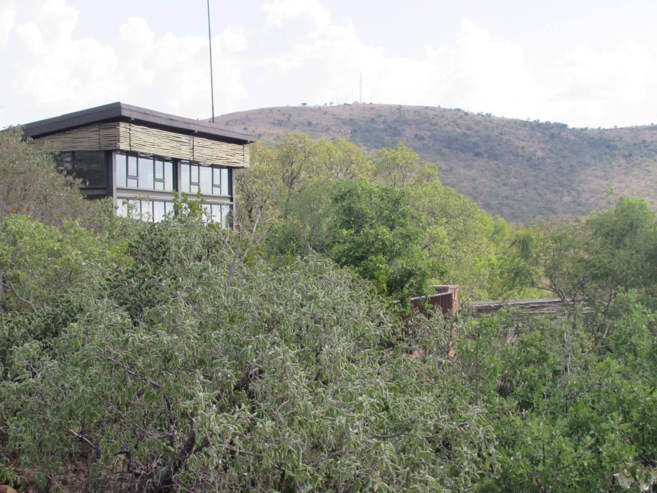 Treetop main house view