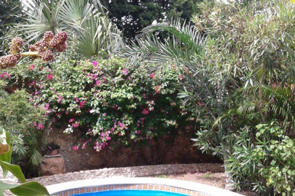 Back garden/jardin arrière