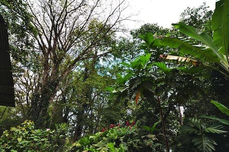 Playa Chiquita Caribbean Jungle - Room 1# - Puerto Viejo de Talamanca - House
