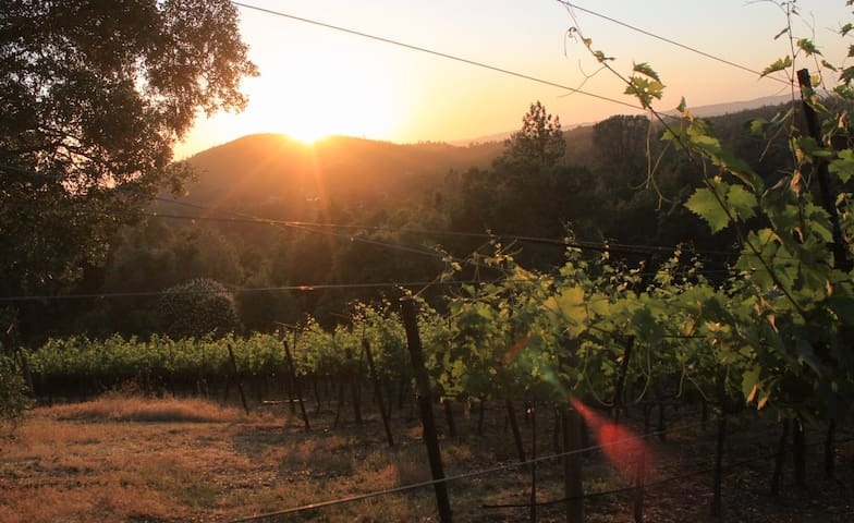Mellowood Winery Private Farm Stay