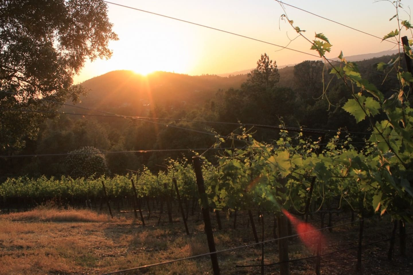 Summer views from the vineyard.