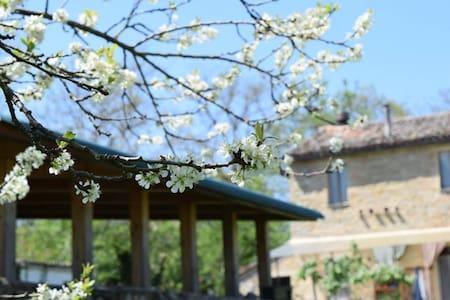 nelle  verdi colline marchigiane - Staffolo - Bed & Breakfast