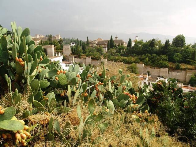 Habitación en bello Carmen Albayzin - Granada - Bed & Breakfast