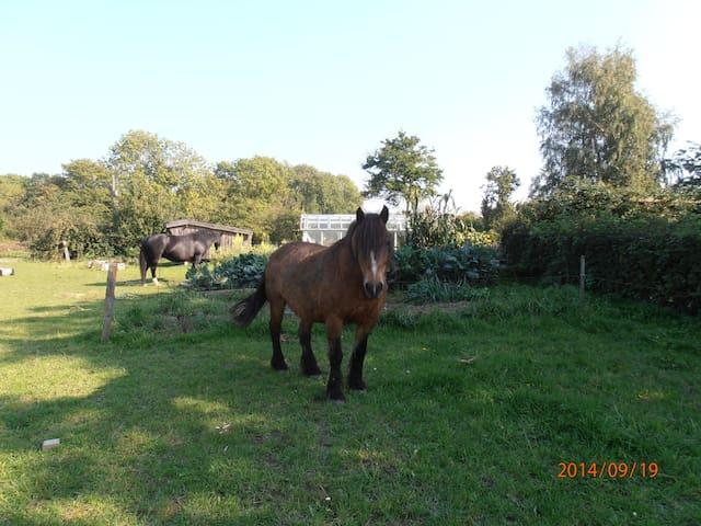 Ferie på landet med dyr - Rønne - Apartamento