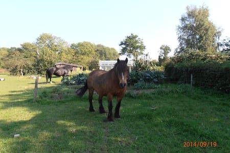 Ferie på landet med dyr - Rønne - Apartament