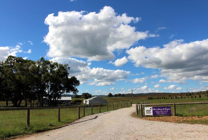 SHORT SHEEP Micro-Winery & Vineyard, entrance from Buckaroo Lane