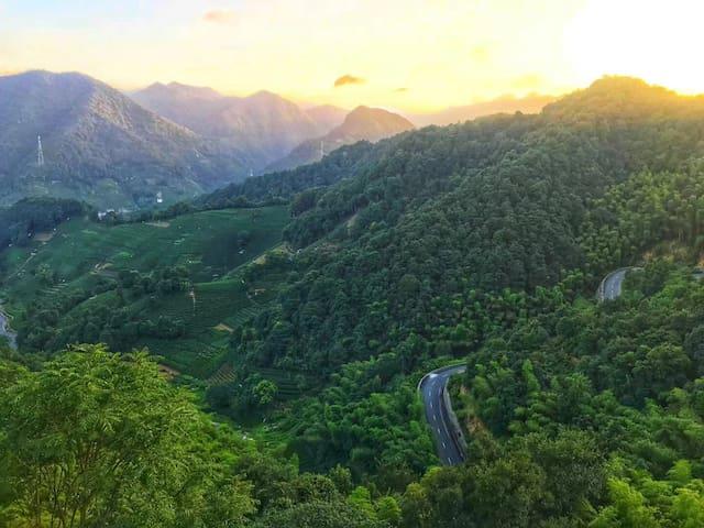 民宿后山夏天的景色