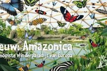 Please visit the zoo around the corner. They have a great Amazonica full of butterflies. At the zoo you will find many wild animals, crazy monkey's, etc