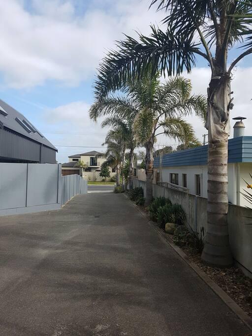 Beautiful palm tree entrance