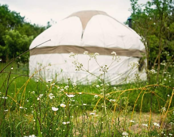 Secluded 19ft yurt retreat, Langport/Glastonbury
