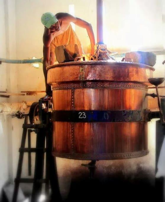 Distillation d'Ylang et d'huiles essentielles