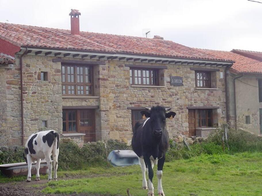 Vivienda vacacional en asturias maisons louer - Casas rurales cerca vilafranca del penedes ...