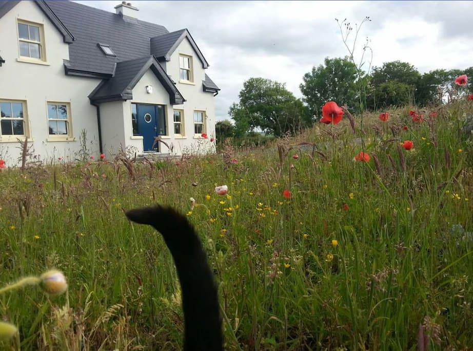 My house. Spring meadow! (Tail belongs to Bertie my cat)