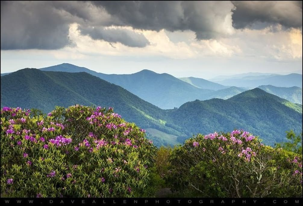 Roan Mt./ Appalachian Tr. Just up the road....