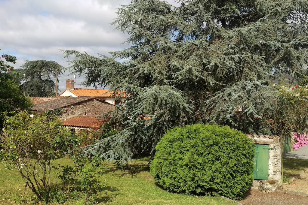 Blick zum vorderen Garten