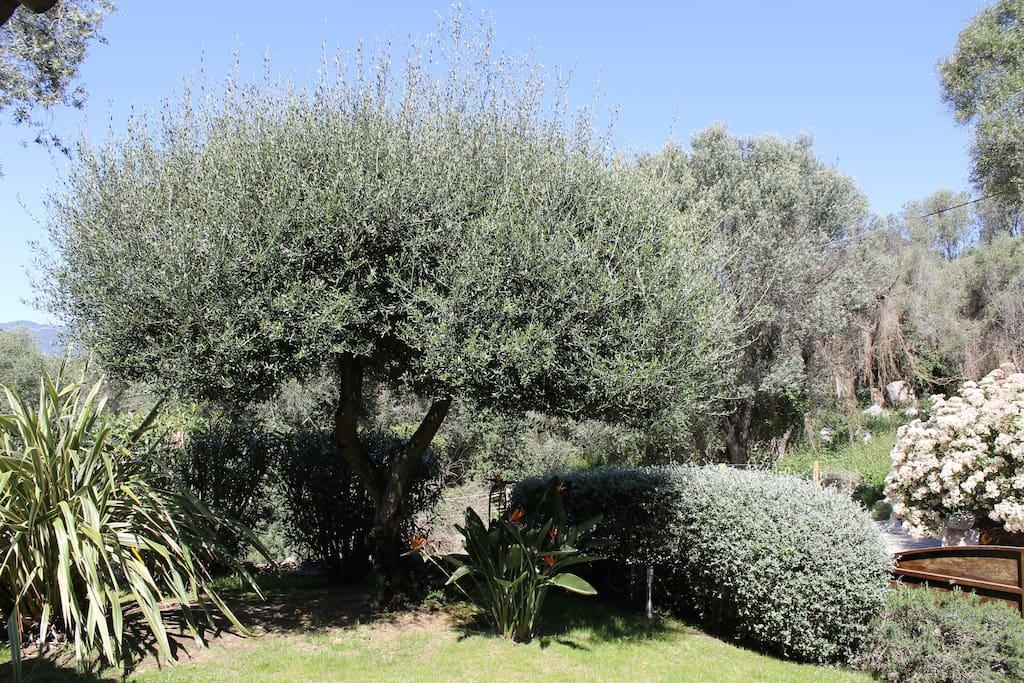 jardin planté