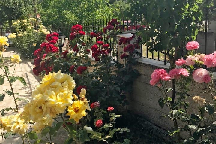Pera Pedi - House of Roses
