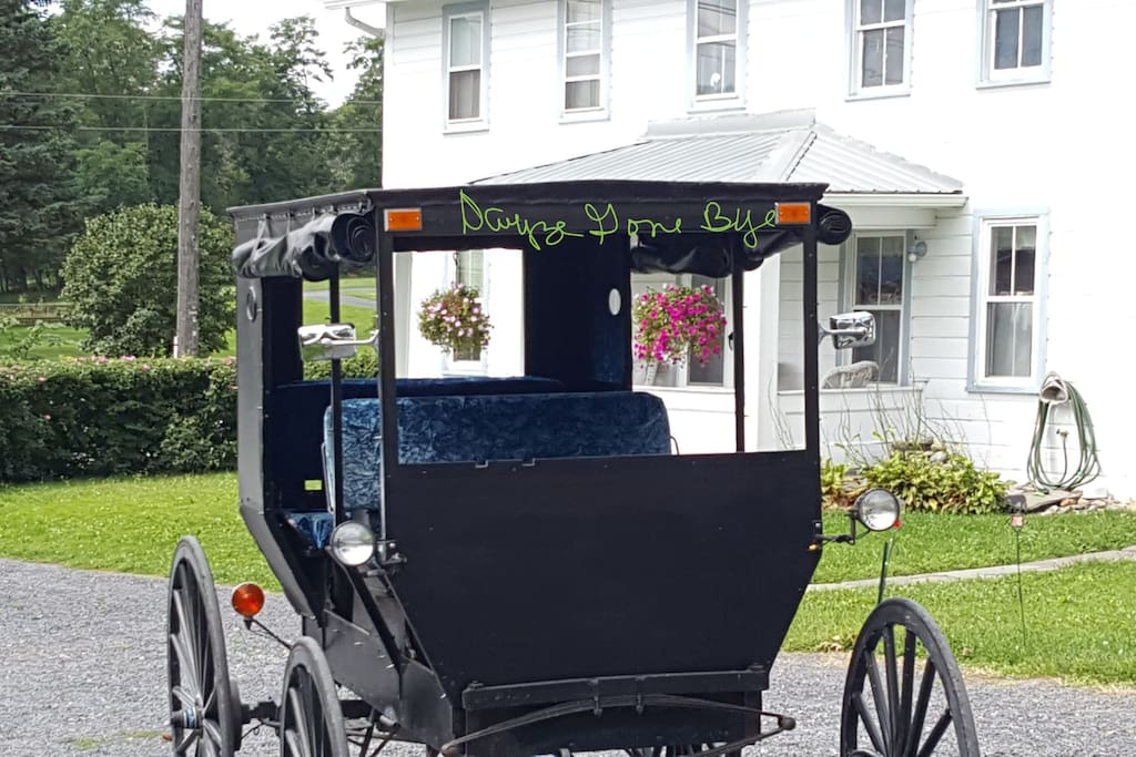 Our Amish buggy is available for Amish country tours at a discounted rate to our guests.