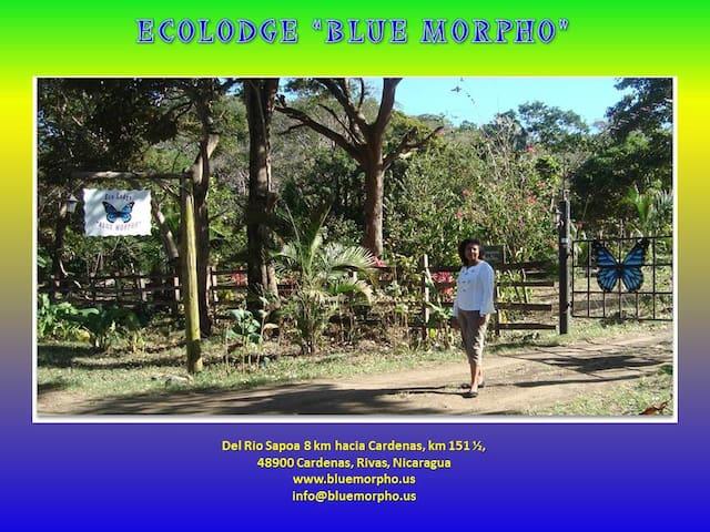 Ecolodge Blue Morpho, Cardenas - Cárdenas - Casa